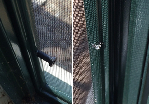 User submitted photo of their window screen.